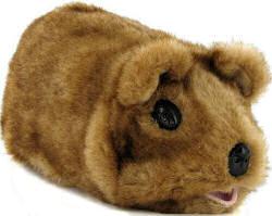 Gupi Guinea Pig